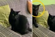 '누가 누구야?' 반려묘와 똑같이 생긴 길고양이에 멘붕
