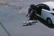 다리 없는 개를 매몰차게 던진 여성 '악마같은 여자'