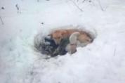 폭설 다음 날, 눈 속에서 발견된 어미개와 강아지들