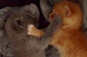 문 앞에 버려진 고양이 형제 '형, 우리 건강해질 수 있을까'