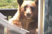 안녕 친구들? 창문 뜯고 집으로 난입하는 곰