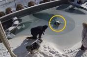 수영장에 빠진 개를 위해 네발로 돌진한 보호자