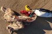풍선 날리지 마세요! 풍선 때문에 죽어가는 동물들