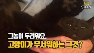 세상에서 가장 터프한 인스타그램의 전설이 된 고양이