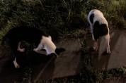 [임보완료] 10월6일 '안락사 예정'인 두 강아지를 도와주세요!