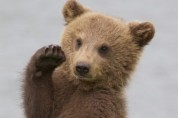 춤추는 아기곰 '왼쪽으로 콕! 오른 쪽으로 콕!'